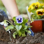 Thinking of getting into the garden this Spring?